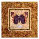 Abby White - Diva Moth