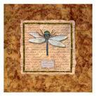 Abby White - Dragonfly