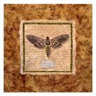 Abby White - Manduca Moth