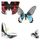 A. Project - Butterflies Dance I