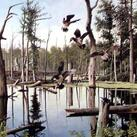 Anthony J. Rudisill - Summer Refuge, Wood Ducks