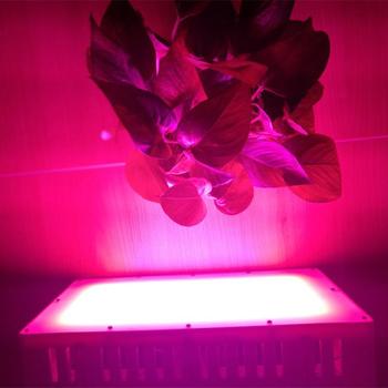 300 Watt full spektrum LED belysning odlingslampa för växtbelysning 3000 lumen