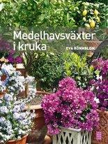 Medelhavsväxter i kruka