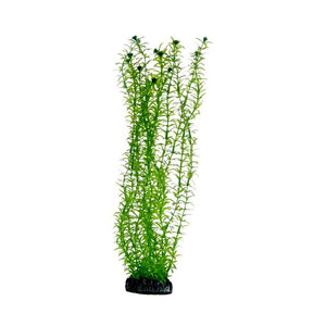 Plast växt- Lagarosiphon 30cm