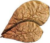 Catappa leaves XXL 10st