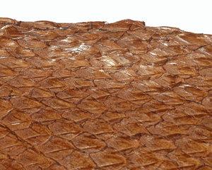 Fiskskinn av lax. Blank kastanjbrun, ca 24*6 cm