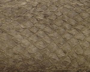 Fiskskinn av lax. Matt mullvadfärgad, ca 24*6 cm