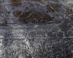 Fiskskinn av havskatt. Montana, ca 24*6 cm