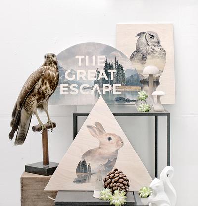 Tavla/Print på plywood Faunascapes - Raccoon