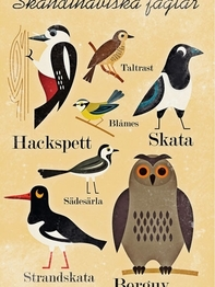 "Affisch Ingela P Arrhenius ""Skandinaviska fåglar"" 50x70 cm"