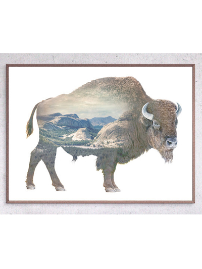 Poster 100x70 Faunascapes - Buffalo