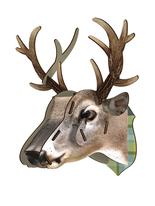 "Hjorttrofé Miho Stor ""King Deer"""