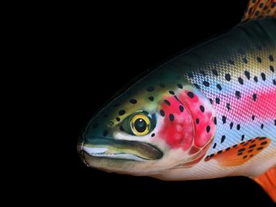 Fisk-kudde Regnbåge 62 cm