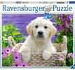 Sweet Golden Retriever 500 Bitar Ravensburger
