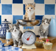 Cats in the Kitchen 500 Bitar Schmidt