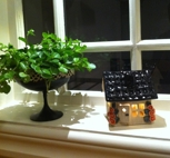 Litet hus-Aprikosa blommor