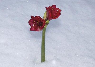 Snödrottningen