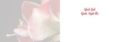 Amaryllis i profil
