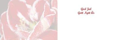 Rödspräcklig amaryllis