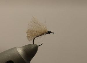 F-fly