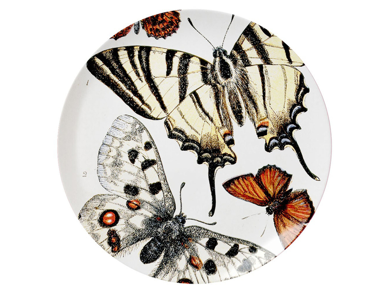 Fat stort, Fjärilar, Biologica