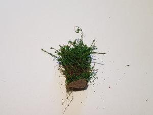Buske 3cm Skogsgrön
