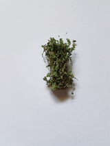 Buske 3cm