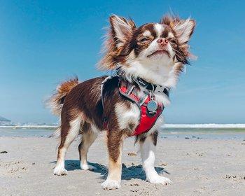Röd Softsele Hundsele vadderad M