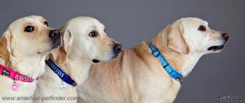 Ziggy MG Dog Collar