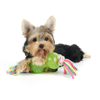 Tuggleksak - Chew and Play - Lime