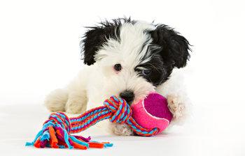 Tuggleksak - Chew and Play - Tennisboll Lila