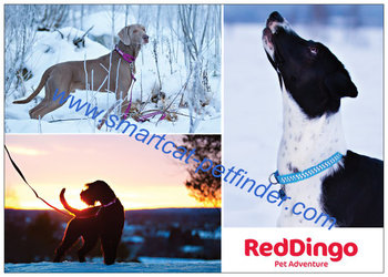 Reklamblad Red Dingo A6 Höst-vinter