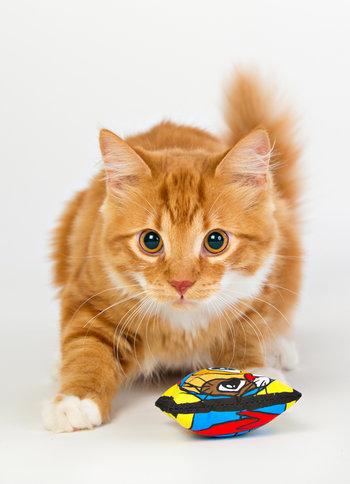Kattmynta kudde från SmartCat 5pack