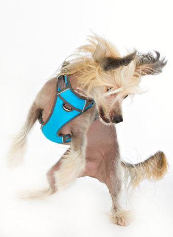 Stars Dog Harness Padded