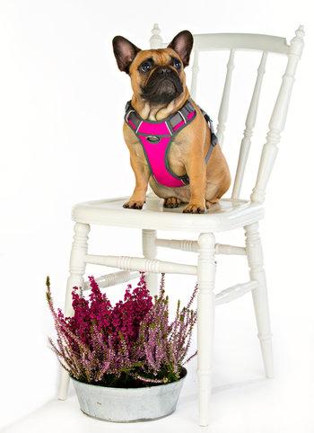 Rosa softsele Hundsele vadderad L