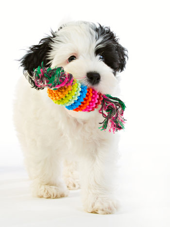 Repleksak Dog Addict Chew Rainbow