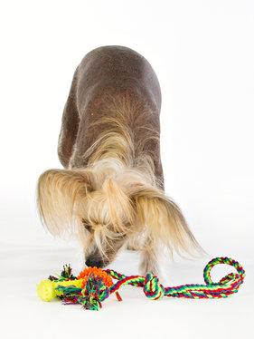 Repleksak Dog Addict Chew Stick