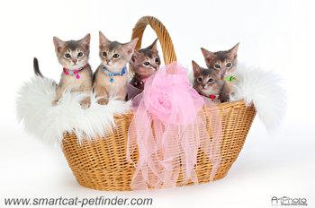Kitten Silver