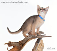 Kitten Sky Blue