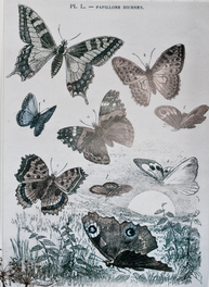 Stor poster fjärilar kopia av gammal fransk gravyr shabby chic lantlig stil