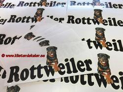 99041 Rottweiler Bildekal