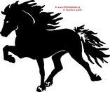 Enkel Islandshäst 6