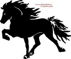 Single Icelandic horse 6