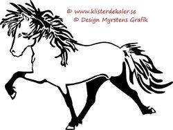 Enkel Islandshäst 7
