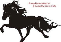 Enkel Islandshäst 9