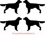 Miniatyrer 4-pack Golden retriever
