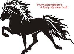 Enkel Islandshäst 11