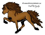 Single Icelandic horse 13 color