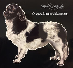 Stabyhoun Dog, sticker