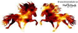 Double Fire Icelandic horses